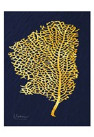 Golden Sea Fan Fine Art Print