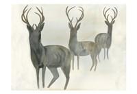 Deer Trio Fine Art Print