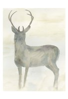 Solo Deer 2 Framed Print