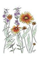 Common Blanket Flower Framed Print
