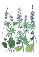 Wild Lupine Fine Art Print