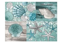 Shell Collage Fine Art Print