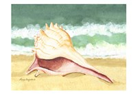 Seashell I Framed Print