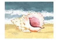 Seashell II Fine Art Print