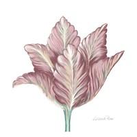 Romantic Tulip 1 Framed Print