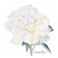 Peace Rose 1 Fine Art Print