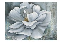 Silken Bloom II Fine Art Print