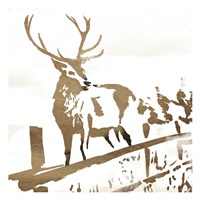 Deer Gaze Framed Print