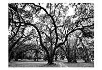 Woodlands Fine Art Print