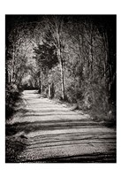 Country Lane Fine Art Print