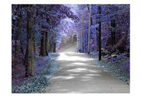 Violet Glow Fine Art Print