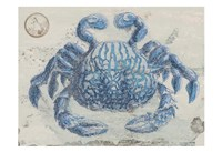 Mysterious Crustacean Framed Print