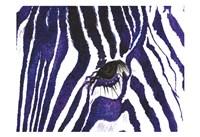 Blue Zebra Fine Art Print