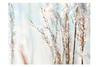 Blue Grasses Fine Art Print