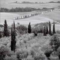 Tuscany VI Framed Print