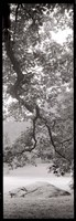 Hampton Field Tree I Framed Print