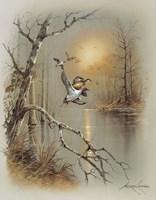 Ducks C Framed Print