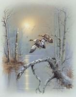 Ducks D Framed Print