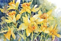 Daffodil Party Fine Art Print