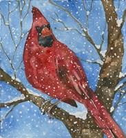 Snowbird Framed Print