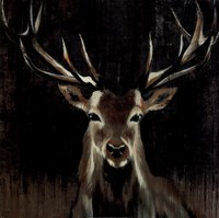 Young Buck Fine Art Print