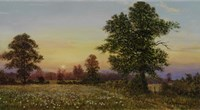 Evening Daisies Fine Art Print