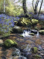 Shallow Brook Fine Art Print