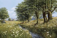 Beeches And Daisies Fine Art Print