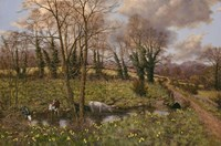 Cattle And Daffodils Fine Art Print