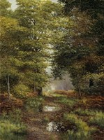 Woodland In The Fall Fine Art Print