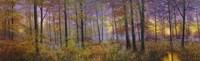 Autumn Wolves Fine Art Print