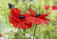 Poppies And Butterfly Fine Art Print