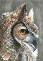Sepia Owl Fine Art Print