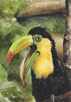 Toucan Bill Fine Art Print