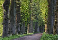 Light Green Forest Road Fine Art Print