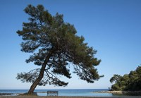 Tree At The Sea Fine Art Print
