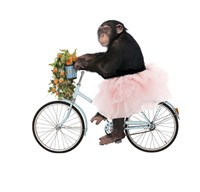 Monkeys Riding Bikes #1 Framed Print