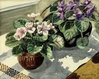 African Violets Fine Art Print