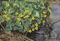Marsh Marigolds Fine Art Print