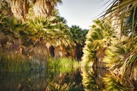 Palms Reflecting Fine Art Print