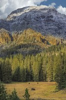 Bison Grazing In The Yellowstone Grand Landscape Fine Art Print