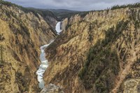 Yellowstone Grand Canyon - Lower Falls Fine Art Print
