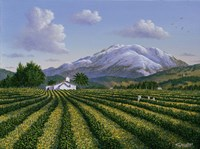 Mount Sta Helena - Napa Valley Fine Art Print