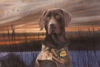 Chocolate Lab In The Sunset Fine Art Print