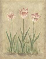 Blooming Tulips I Fine Art Print