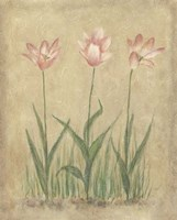 Blooming Tulips II Fine Art Print