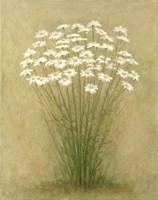 Floral C Fine Art Print