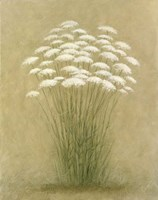 Floral D Fine Art Print