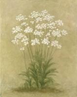 Floral E Framed Print