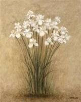 Floral F Fine Art Print